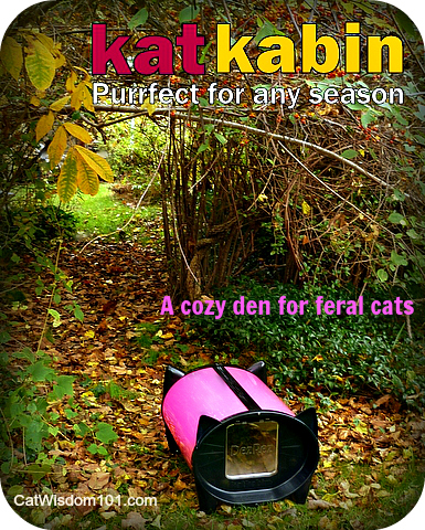 katkabin-dezrez-hot pink-autumn-giveaway