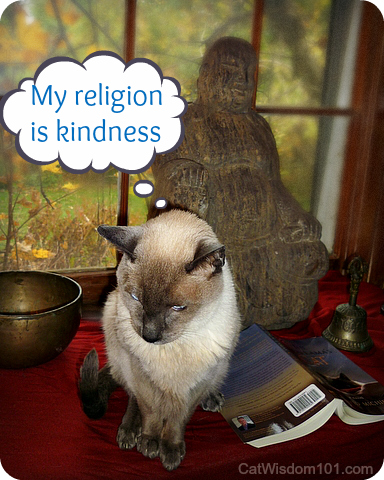 merlin-siamese-quote-buddha-cat-wisdom-dalai-lama 9 Purrfect Kindness To Animals Quotes Illustrated