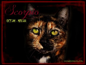 scorpio-cat-astro-kitty-astrology