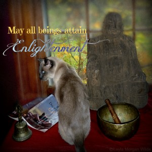 the dalai-lama's cat-david minchie-buddhist-quote-enlightenment-merlin