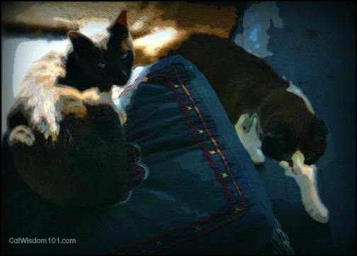 Domino-Gris Gris-cats-art