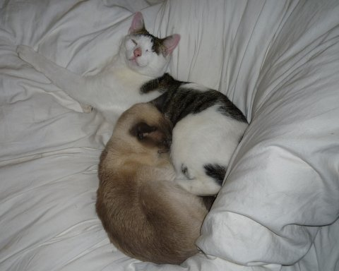 breakfast_bed_cats
