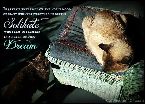 Merlin-gris gris-sunbathing-cats-quote