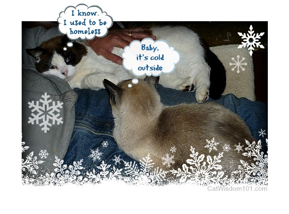 cat-daddy-merlin-domino-cats-quote FIV+ Former Feral Domino's 15th Birthday