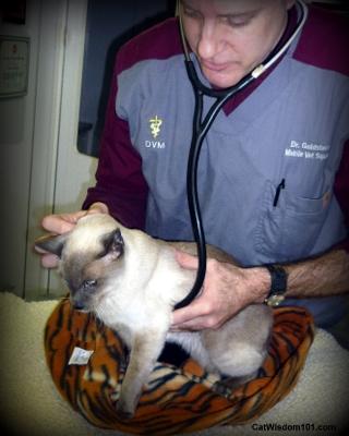 vet 101-exam-dr. goldstein-merlin-kitty-kuddly-mobile vet