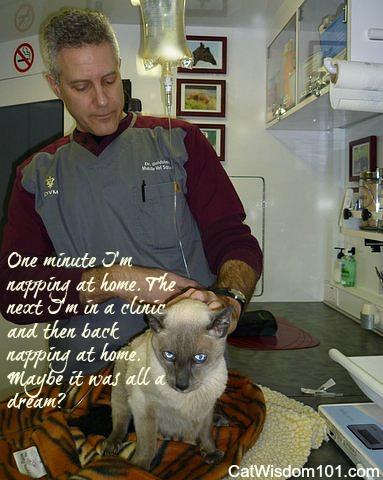 vet-goldstein-mobile-cat-sub q