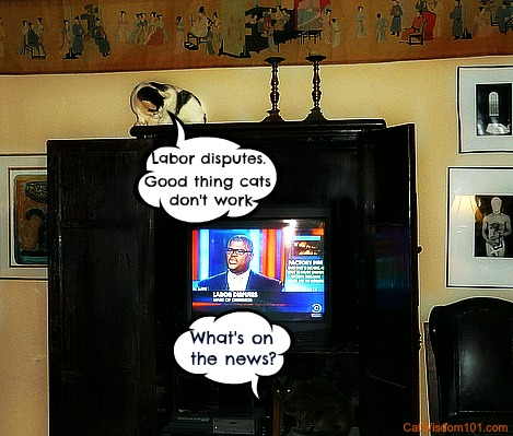 Odin-LOL-cats-TV