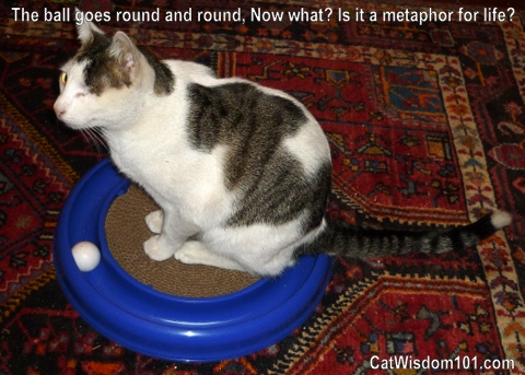 bergan-turbo-cat-toy-odin-quote