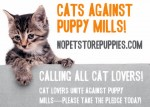 cats against puppy mills-aspca