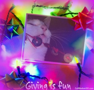 christmas-cat-gift-giveaway