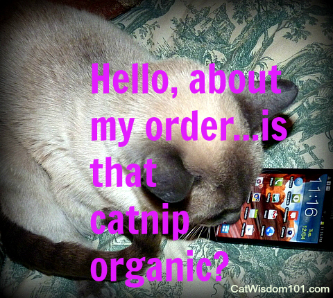 connection-communication-cell phone-cat-humor-quote-catnip