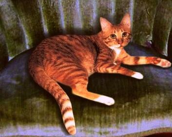 Finn mcCool-cat-writer