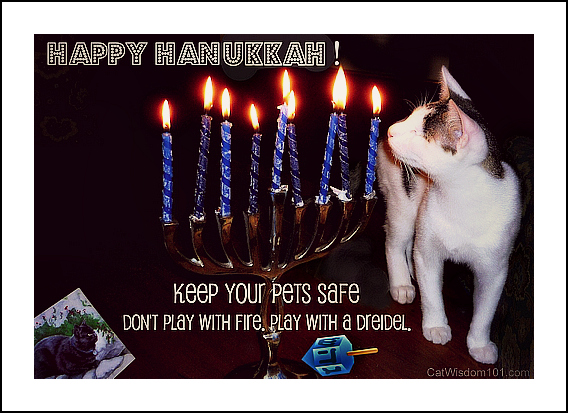 play it safe-holiday pet hazards-hanukkah-cat-dreidel-quote