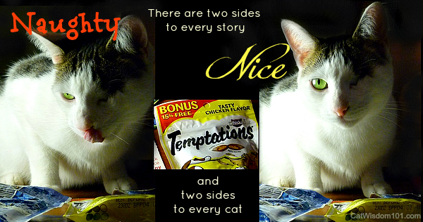 temptations-cat-treats-giveaway