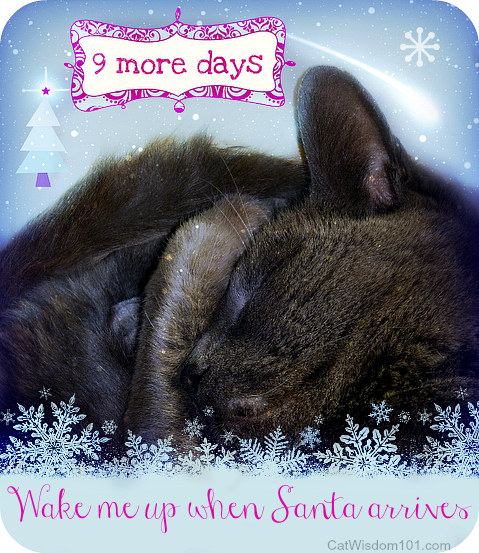 Christmas Cat Quotes. QuotesGram