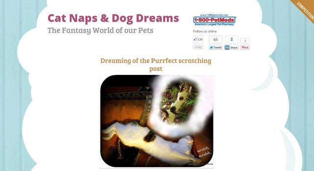 1-800-petmeds-pet-photo-contest-cat naps
