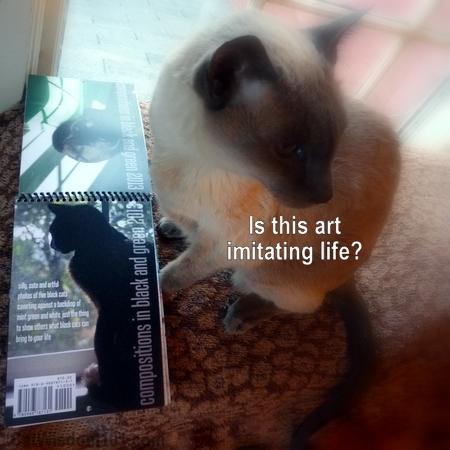 2013-cat-art-calendar-quote