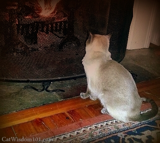 cat-hearth-fireplace-.bmp