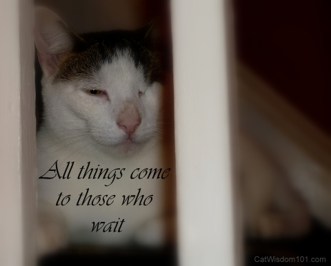 cat-quote-patience