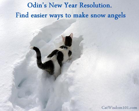 snow_storm_Jonas_cat