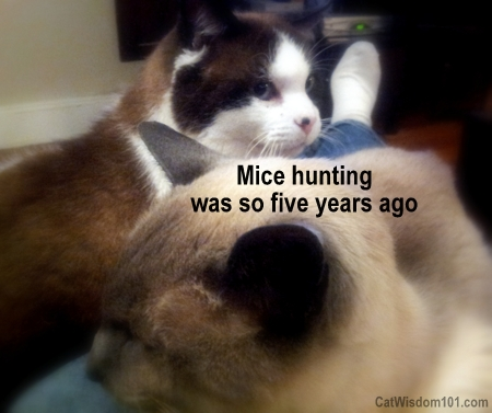 cats-quote-mouse-hunting-quote