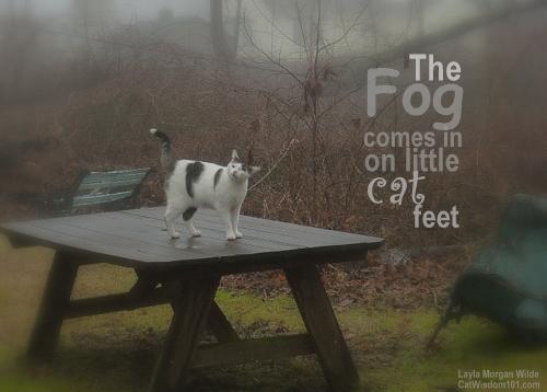 quote-cat-fog-garden