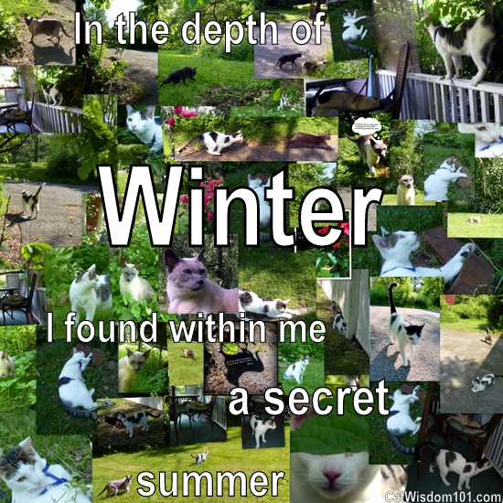 quote-cats-winter-summer-green