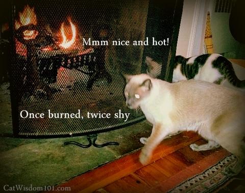 quote-fire-burned-cat-caution.bmp