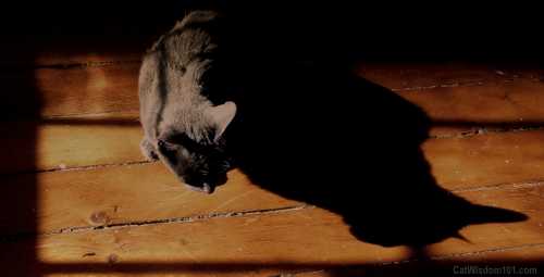 shadow-sun-puddle-cat-gris gris