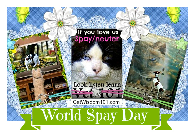Spay-day-pets-cats-neuter