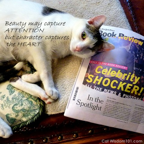 cat-celebrity-shocker-NY Times book review-quote
