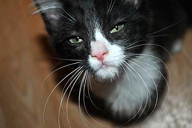 foster-cat
