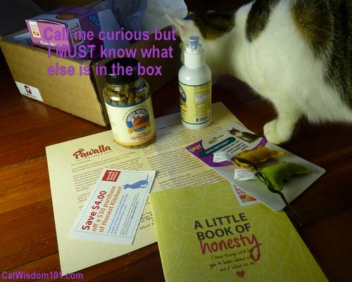 pawalla-cute critters-catnip toys-curiosity-cats