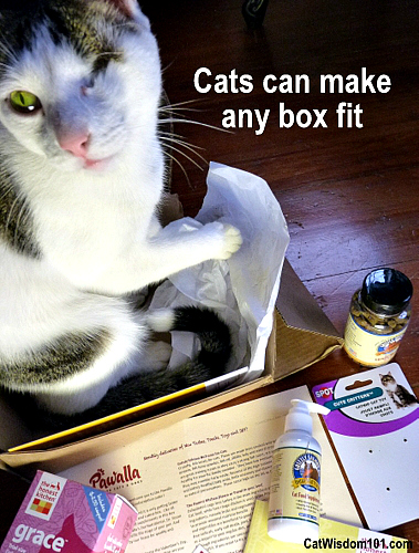 pawalla-mini-box-cats-giveaway