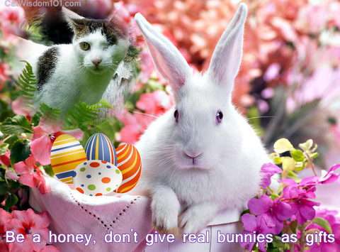 Easter-bunnies-quote-cats