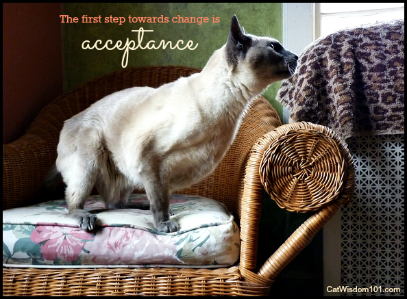 Merlin-cat-siamese-quote-vision-acceptance