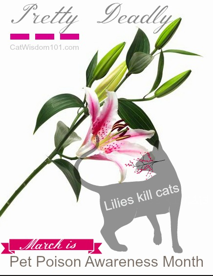 plants_toxic_cats