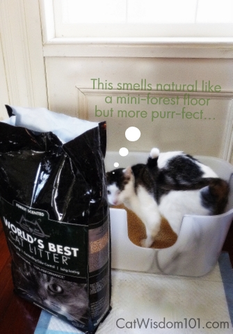 WBCL_Forest Scent-Cat litter-NVR Miss litter box