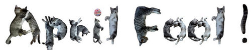 cats-april fool!-funny-typography