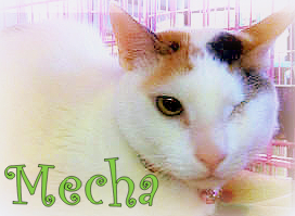 mecha-cat-animalkind shelter