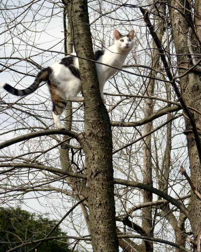 odin-cat-tree-climbing-spring-march-madness