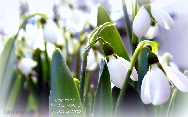 snowdrops-spring-quote