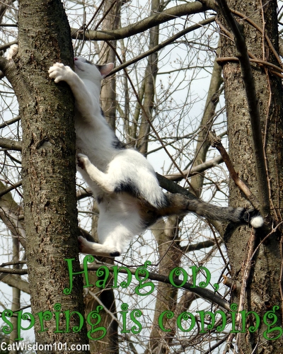 spring-cat-quote-tree-climbing