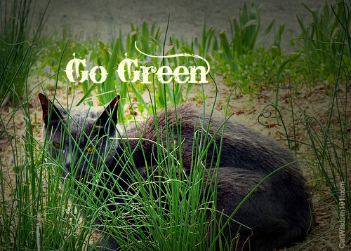 Earth day-cat-go green