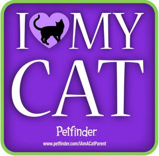 I love my cat-petfinders-I am a cat parent