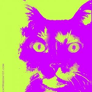 another insane devotion-poem-cats