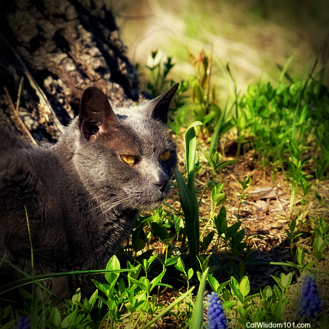 cat-portrait-gris gris