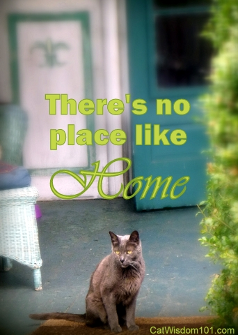 cat-quote-home