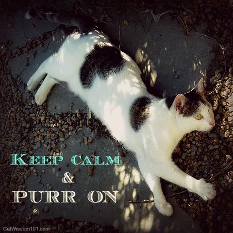 purring