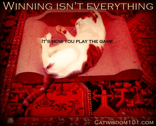 cat-quote-winning-game-amazecats-brawny cats